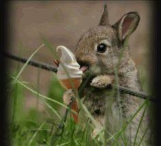 Tiny bunny with tiny ice cream cone!