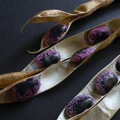 beans and pods by Brano Kovacevic
