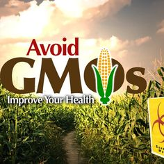 This technology is thought to increase food yields and create super foods that grow larger and are more resilient to pests.  Blog Post: http://drjockers.com/avoid-gmos-and-improve-your-health-3/  #GMO #Technology #Food #Grow #Avoid #Genetically #Modified #Corn #Pests #Doctor #Jockers