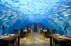 Ithaa Undersea Restaurant Is in a League of Its Own Located within the Conrad Maldives Rangali Island hotel, Ithaa Undersea Restaurant is a world class dining experience even before you consider its one-of-a-kind views of the underwater wildlife. Hotel Subaquático, Eilat, Cool Restaurant, Restaurant Offers, Restaurant Design, Luxury Restaurant, Seafood Restaurant, Unique Restaurants, Kids Restaurants