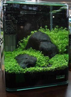 Simple plantings with minimal stone