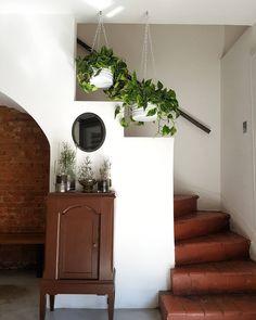 Plantas na decoração: crie ambientes mais bonitos e aconchegantes