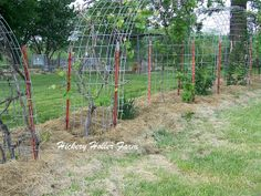 Hickery Holler Farm: Late May In The Orchard   #grapevines