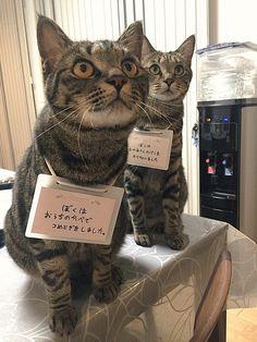 いたずら猫への可愛いお仕置き。反省させようとカードを首から下げてみたところ… (*´ェ`*) 7枚