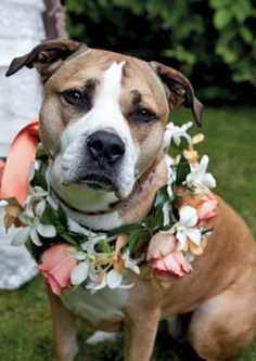 Bruno will be dressed up for our wedding ♡ if we have a girl dog by then this will be similar to hers ♡