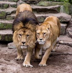 King and queen by Roderick Lucassen on 500px