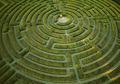 Called the largest plant maze in the world, the ever-changing maze at Reignac-sur-Indre, France blossoms into a brilliant field of sunflowers in summer and in winter is remarked and sown to reappear as a new design in spring. In 1996, the maze's debut year, over 85,000 people attempted to find passage through the 10-acre puzzle.