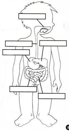 el aparato digestivo fichas infantiles del cuerpo humano para imprimir gratis para niños