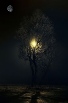 """Could this be the Lightning Tree?     """"Tree of the Night """" by EMERALD WAKE"""