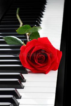 Red rose on piano. Red rose on black piano , Music Wallpaper, Rose Wallpaper, Love Rose Flower, Piano Art, Stylist Tattoos, Red Aesthetic, Instruments, Beautiful Roses, Cute Wallpapers