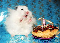 To be as happy as a hamster with a cupcake!