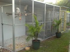 Image result for amazing parrot aviary