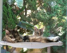 Soft Greys  Curious Cats Window Perch by JennGv on Etsy