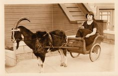 FANCY WICKER CARRIAGE ~ CUTE GIRL ~ PULLED BY LARGE GOAT - 1928