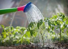 El agua es un elemento indispensable para el desarrollo de las plantas, sin ella no podrían sorber del suelo los nutrientes que necesitan para poder vivir Diferentes tipos 1.- Riego manual con reg…