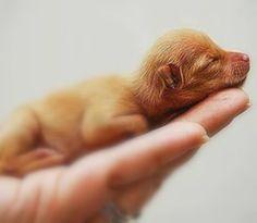 a little baby puppy