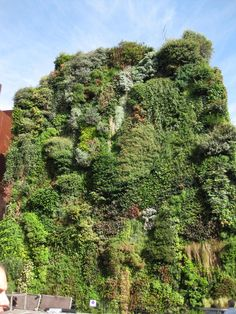 From Madrid: Patrick Blanc's Vertical Garden | Credit: Nicole Jewell