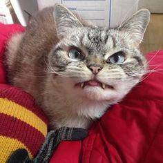 Und ein Lächeln im Gesicht. | Diese böse Vampir-Katze ist so niedlich, dass sie Deinen Tag retten wird