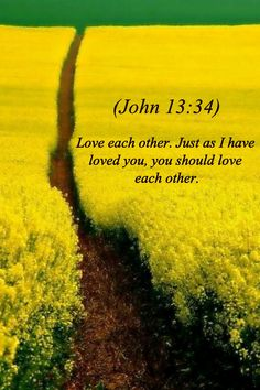 John 13:34 NLT