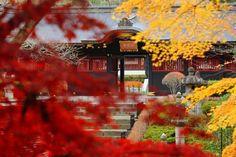 極彩色の建築と紅葉が見事♪ ほっくりスイーツも楽しむ秋さんぽへ。 Gokusaishoku no kenchiku to kōyō ga migoto ♪ hokkuri suītsu mo tanoshimu aki sanpo e. Arsitektur warna-warni dan dedaunan merah memang luar biasa ♪ jalan-jalan musim gugur sambil menikmati kue-kue renyah. http://news.mynavi.jp/news/2015/10/16/144/