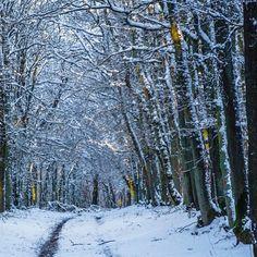 Walking in a winter wonderland.  #uwn_holland  #super_holland  #wonderful_holland  #instanetherlands  #holland_photolovers  #dutch_connextion  #ig_discover_holland  #bergenopzoom  #global_hotshotz  #allbeauty_addiction  #gurushots  #big_shotz  #theworldshotz  #ig_world_colors  #heart_imprint  #gottolove_this  #worldbestgram  #fotocatchers  #fotofanatics_nature_  #nature_of_our_world  #fiftyshades_of_nature  #pocket_trees  #bd_trees  #tree_magic  #tree_brilliance  #discovernaturee…