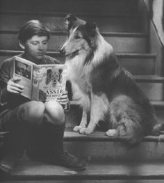 Lassie reading one of my all time favorite books - Eric Knight's 'Lassie Come Home' ❤ :)