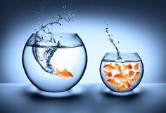 Вы когда-нибудь наблюдали за рыбками в грязном аквариуме? Они выглядят отрешёнными и уныло плавают кругами, будто к их плавникам привязали кандалы, которые постоянно тянут их вниз. Замените грязную воду на свежую, и вы заметите, что рыбы начнут плавать с умиротворением, а не с ужасом. Если «вода», в которой мы плаваем, — это наши мысли, то мы сами…