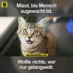 That is so daily - Animals And Pets, Funny Animals, Cute Animals, Cute Cats, Funny Cats, Tierischer Humor, Cute Phrases, Cat Memes, Crazy Cats