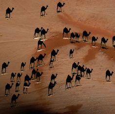 De kamelen die je ziet zijn in werkelijkheid hun schaduws.