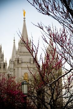 One of my favorite pictures of the SLC temple.