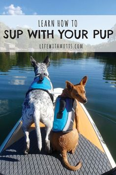 How to teach your dog to stand up paddle board and make it a fun experience for both you AND your dog!: