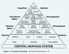 SENSORY INTEGRATION Central Nervous System