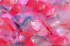 The colorful tropical fishes by Donkeyru, via Dreamstime