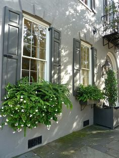 Charleston window boxes. Good idea for the shaded area of my dream flower/garden shed...