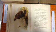 Irby, L. Howard L. The ornithology of the Straits of Gibraltar. London : R. Porter, 326 p. Aves I