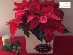 LOS MEJORES ARREGLOS FLORALES A DOMICILIO. En esta navidad llene su hogar con la belleza de la tradicional flor de Nochebuena. En Lilium tenemos para usted los más hermosos y coloridos diseños florales, que darán un toque de elegancia a todos los espacios en donde los coloque. Le invitamos a conocer nuestra colección, ingresando a nuestra página de internet www.lilium.mx