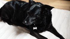 [Lifestyle/Story] Avoir un chien à Paris ? Bonne ou mauvais idée ? Voici ce qui t'attend > https://wp.me/p7SXLJ-28D  #dog #dogslover #paris #advice #story #instadog #dogs #style #pet #pets #bastard #blackdog #black #love #life #cute #mylove