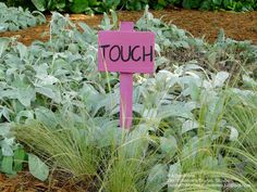Sensory garden: touch. Try lambs ear, wooly thyme, moss, rubbery succulents.
