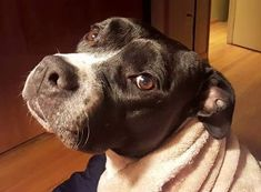 My name is Jameson. I am 5 years old up to date on shots and have been spayed. If you are looking for a more settled but still playful girl that's me! I am an absolutely gorgeous 65 pound bundle of love and a fun smart eager-to-please sort of dog who longs for a home and family to call my own. It's the only thing in life I don't have and have been wishing for for so long. I'm smart treat-motivated and eager to make you happy...a perfect combination when training a dog. I'm energetic will…