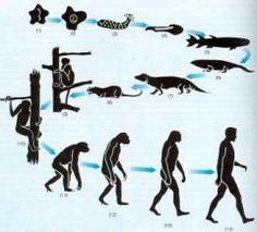 TimeRime.com - evolucion del hombre Linea de tiempo