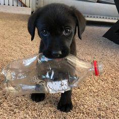 Watch funny and cute dogs and puppies as they are the most lovable pets in the world. Baby Animals Super Cute, Super Cute Puppies, Cute Little Puppies, Cute Little Animals, Cute Dogs And Puppies, Cute Funny Animals, Baby Dogs, Doggies, Adorable Puppies