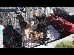 """Erleben Sie, wie wir Hunde in Los Angeles freikaufen. Ihre Rettung ist symbolisch und soll weltweit darauf aufmerksam machen, dass Tiere nicht einfach wie Sachen verkauft werden dürfen.  """"The forgotten pets from L.A."""