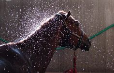 Things Horses Do.sometimes: they don't like water in their ears All The Pretty Horses, Beautiful Horses, Vet Help, Horse Anatomy, All About Horses, Majestic Horse, Horse Tips, Barrel Racing, Horse Training