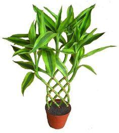 Plantas de interior tipos cuidados y fotos - Plantas de interior ...