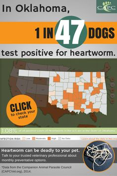topic boarder line positive heart worm