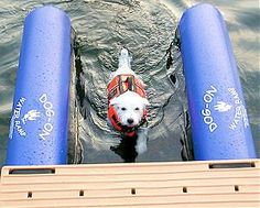 Perfect Dog Ramp for Boats, Docks and Pools