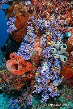 sea life - sea life photography - sea life underwater - sea life artwork - sea life watercolor sea l Underwater Creatures, Underwater Life, Ocean Creatures, Nemo Y Dory, Sea And Ocean, Sea World, Tropical Fish, Colorful Fish, Ocean Life