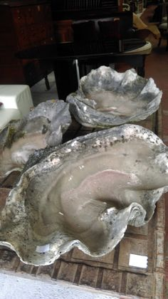 A collection of 3 Genuine antique Giant Clam shells (measure almost 1 metre wide)