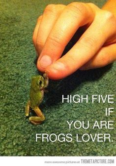 Funny pictures about High five little guy! Oh, and cool pics about High five little guy! Also, High five little guy! Funny Frogs, Cute Frogs, Baby Animals, Funny Animals, Cute Animals, High Five, Beautiful Creatures, Animals Beautiful, Frosch Illustration