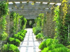 The Lutyens pergola at Hestercombe is one of the finest in Britain. In high summer it is covered with climbing roses, clematis, honeysuckle and vines and is underplanted with lavender.